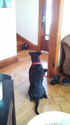 "Bruno says, ""I'll just wait here until Sweetie gets back."""